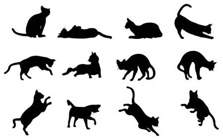 black cat: cat silhouette