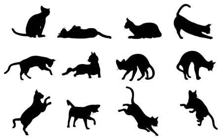 gato negro: silueta de gato