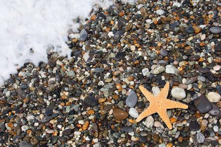 seacoast: Starfish on stone seacoast Stock Photo