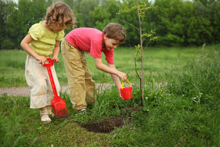 boy and girl plant tree photo