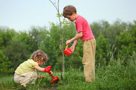 small plant: kids plant the tree