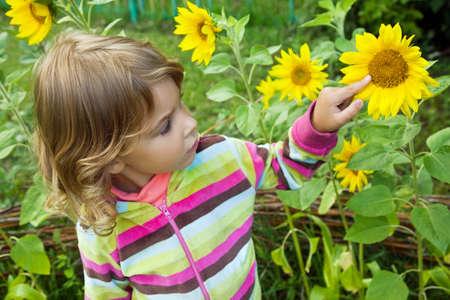 pretty Little Girl looks at sunflower in garden  photo