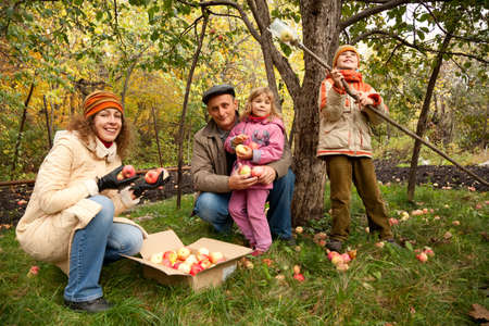 Mother, daughter, son and grandfather reap harvest of apples photo