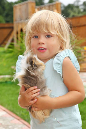 little girl plays with Guinea pig on meadow photo