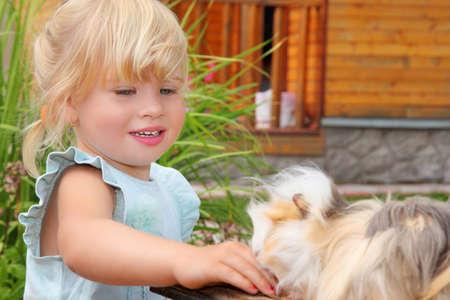 little girl feeds Guinea pig in courtyard near house  photo