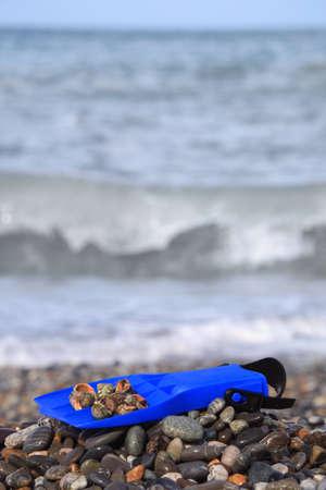 flipper: Flipper avec coquillage sur plage de galets