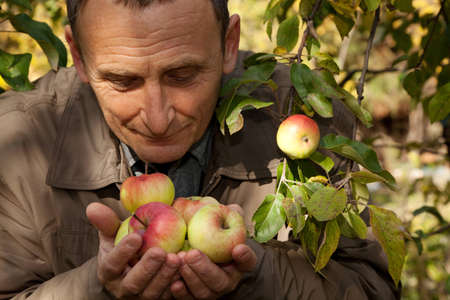 pensionary: Middleaged man hold apples on hands and smell them Stock Photo