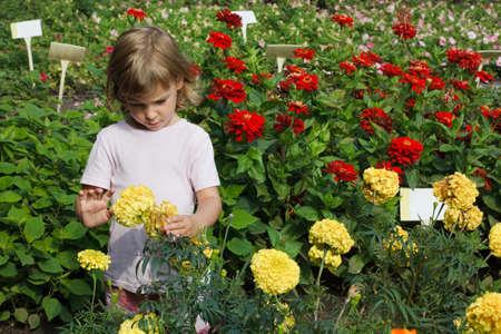 young girl holding in her hand yellow flower, red around zinnia photo