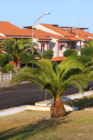 View on  street of resort city from one side with  large palm in  center, focus on house