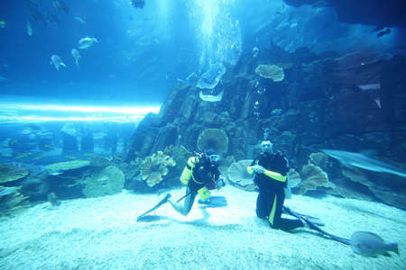 two scuba divers in wet suits diving in big aquarium with fishes