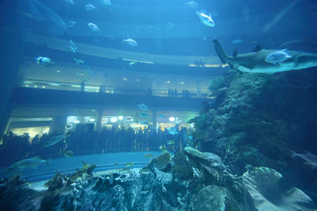 celling: fishes in underwater aquarium tunnel, balconys with people at back side