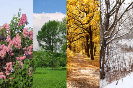 and four of the year: four seasons spring, summer, autumn, winter trees collage