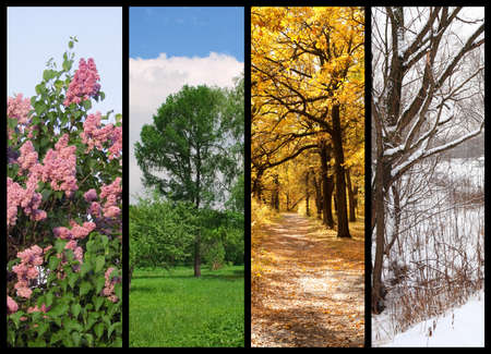 four seasons spring, summer, autumn, winter trees collage with border Stock Photo