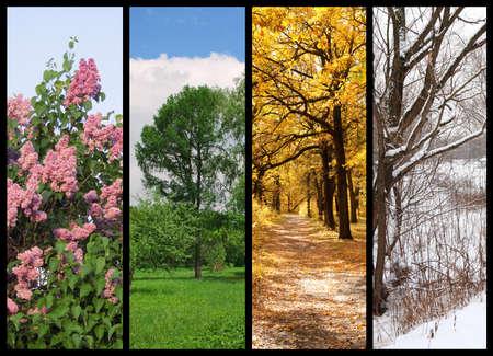 four seasons spring, summer, autumn, winter trees collage with border Standard-Bild