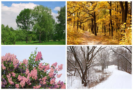 four seasons spring, summer, autumn, winter trees collage with white borders 스톡 콘텐츠