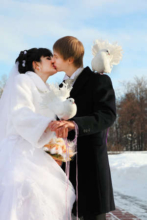 beautiful bride and groom kiss and hold white dove at winter outdoors; second white dove sits on man shoulder photo