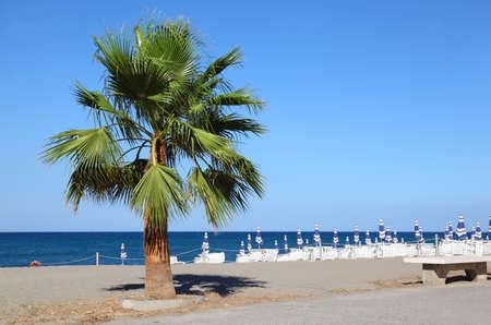mandatoriccio: big beautiful green palm tree growing at seashore. striped beach umbrellas and sunbeds Stock Photo