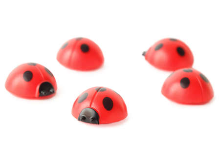 lady bug: five red small ladybugs isolated on white, round dance, khorovod