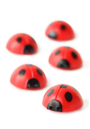 five element: five red small ladybugs are crawling isolated on white; perspective