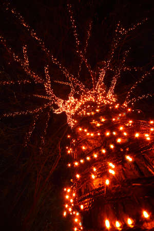 sloppy: trunk and sloppy branches of tree with many decorative red lights at night