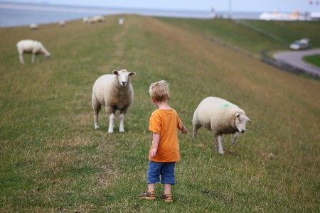 Boy with sheep Stock Photo - 7517684