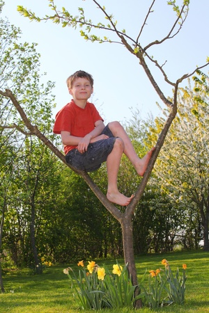 A young boy sitting in a tree photo