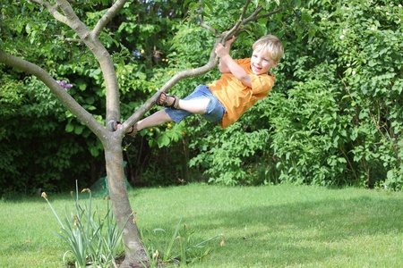 A young boy climbs a tree