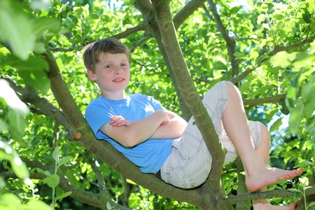 Happy young boy sitting in a tree photo