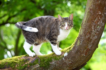 gray cat: Hunting cat on a tree