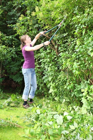 Gardening woman cutting a hedge Stock Photo - 14715358