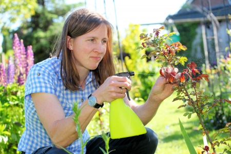Young woman in garden sprays roses Stock Photo