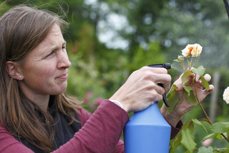 insecticidal: Happy young woman sprays some roses in the garden