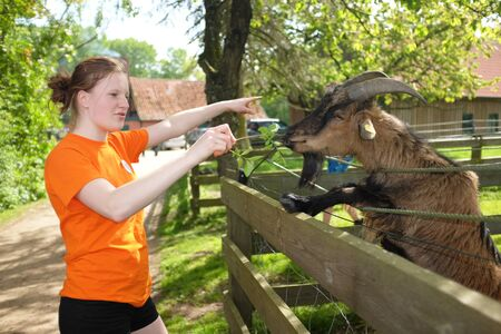 feeds: Young teenage girl feeds a goat