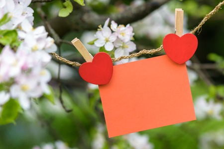blank red card pinned on blossom apple tree. Coppy space for wordings. Pinned with heart pins. Spring blossom branches of apple trees.