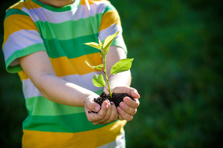Two hands of the children are planting the seedlings into the soil. Kid boy hold in his hands new tree sprout. Earth day and ecology safe concept. Archivio Fotografico