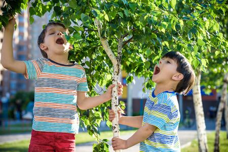 Two boys play near Birch tree buds kids has allergy to blooming tree. Healthcare concept.