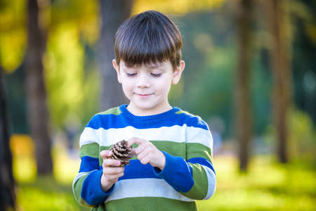 White Toddler boy playing in a pine forest with pine cones. Conifer cones on the grass serve as toys for the kid.