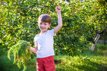 Cute little boy holding a bunch of fresh organic carrots in domestic garden. Healthy family lifestyle. Harvest time. 写真素材