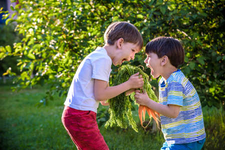 Children with a carrot in the garden. Two boys with vegetables in farm. 写真素材