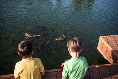 Two children feed the wild ducks and shoal of small fish in azure clean transparent lake. Brother boys are best friends. Summer holiday friendship concept. Banque d'images