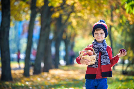 Child picking apples in autumn. Little baby boy playing in apple tree orchard. Kids pick fruit in a basket. Toddler eating fruits at fall harvest. Outdoor fun for children. Healthy nutrition.