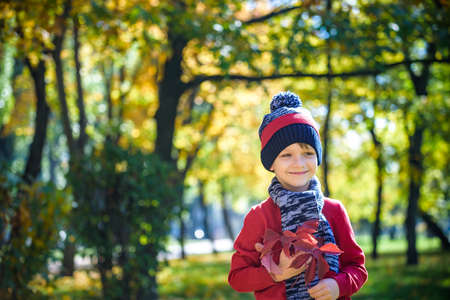 Happy baby playing with leaves in nature. Sunny autumn day. Boy in a cap and scarf. Throwing yellow leaves. Season, children, lifestyle concept.