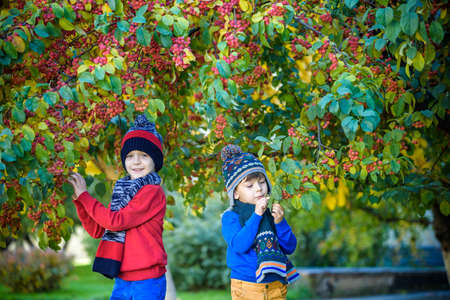 Child on a farm in autumn. Little boy and his brother friend playing in decorative apple tree orchard. Kids pick fruit. Toddler eating fruits at harvest. Outdoor fun for children. Healthy nutrition