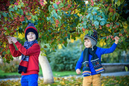 Child on a farm in autumn. Little boy and his brother friend playing in decorative apple tree orchard. Kids pick fruit. Toddler eating fruits at harvest. Outdoor fun for children. Healthy nutrition Stock fotó