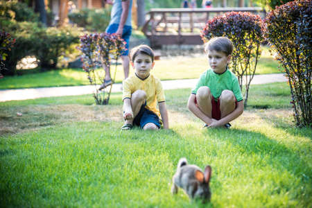 Two sweet little boy and Pennon rabbit bunnies are sitting on green grass. Friendship between humans and animals. Children and pets. Banco de Imagens