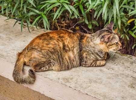 beautiful cat on sement floor background