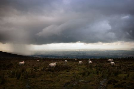 gather: Sheep gather as rain and storm clouds move over an irish mountain landscape Stock Photo