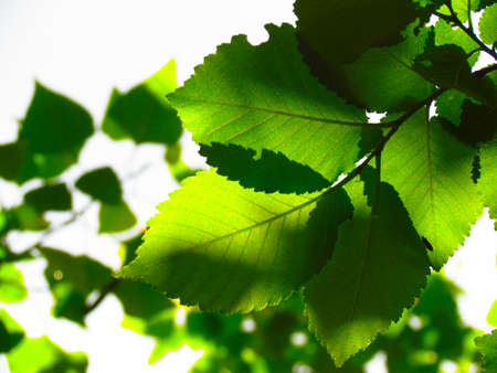 feuillage: feuillage vert