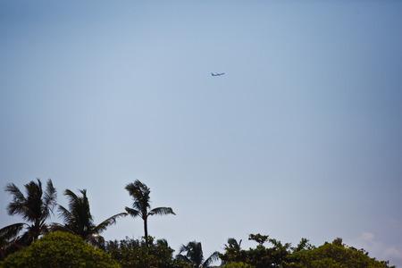 plane above palms