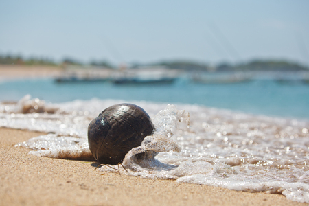 coconut on the ocean shore